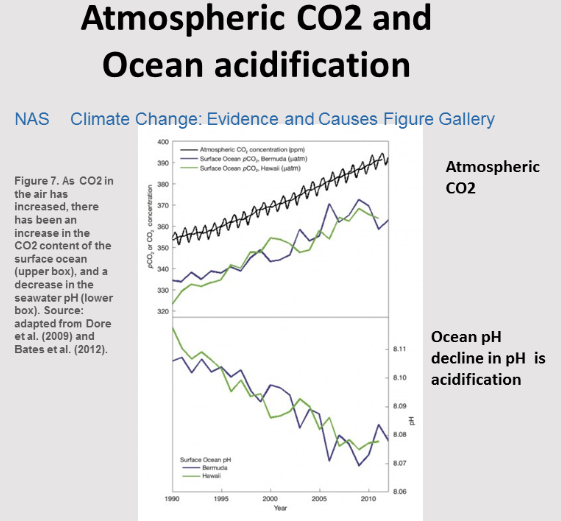 The effects of climate and acidification